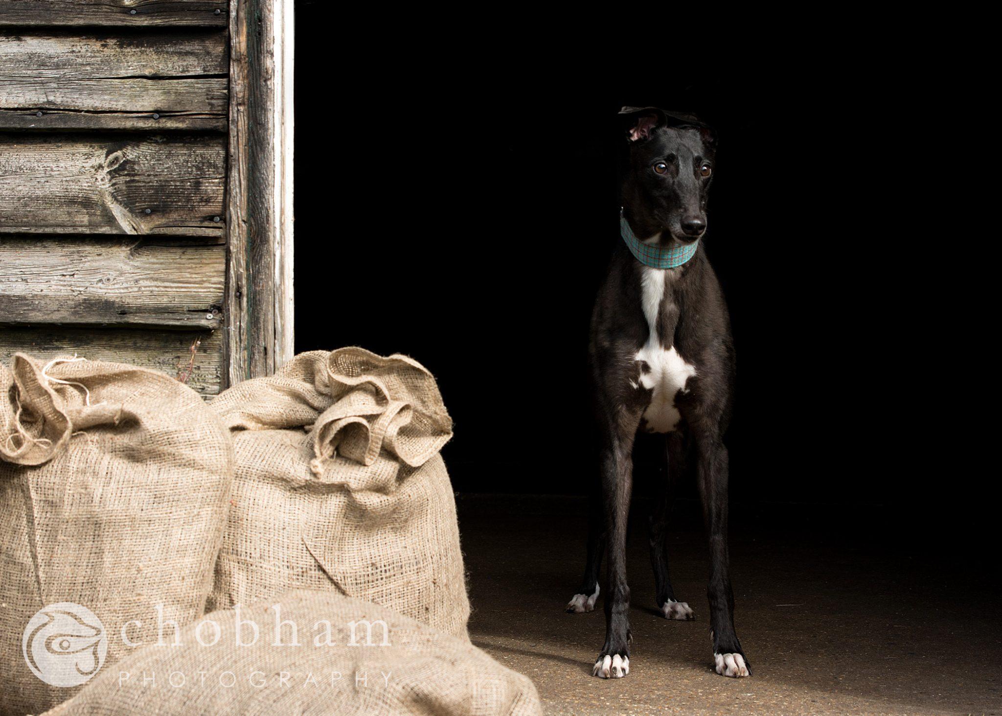 Wimbledon Greyhound Welfare Calendar 2018